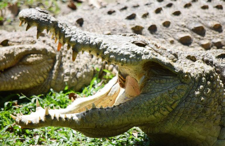 Bioparque Los Ocarros: Un destino para descubrir el alma de la fauna silvestre