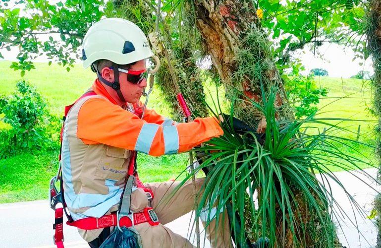 Covioriente realiza actividades de aprovechamiento forestal de acuerdo con la normativa legal vigente